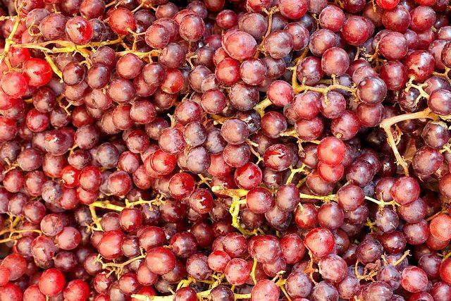 Vinné hrozny