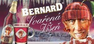 Bernard s čistou hlavou Višeň